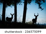 a buck and a doe silhouetted...   Shutterstock . vector #236575099
