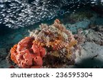 Small photo of Bearded, tasseled or smallscale scorpion fish (Scorpaenopsis oxycephala) sitting on sponge and coral on a coral reef in the Indian Ocean, Zanzibar surrounded by glassfish (Ambassis)