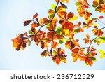 malabar deciduous trees during... | Shutterstock . vector #236712529