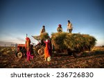 Small photo of Family harvesting crops, near Jaipur, India.