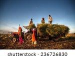 family harvesting crops  near...   Shutterstock . vector #236726830