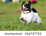 Stock photo happy dog 236737753