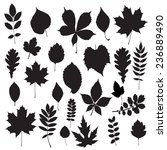 leaf silhouette collection.... | Shutterstock . vector #236889490