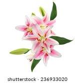 a pink lily bouquet   Shutterstock . vector #236933020