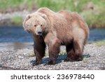 Brown Bear  Full Body Profile ...