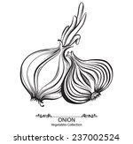 onion whole and sliced. vector... | Shutterstock .eps vector #237002524