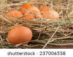 Selective Focus On The Egg...