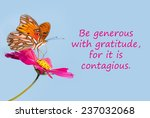 butterfly on a pink flower with ... | Shutterstock . vector #237032068