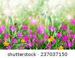 summer landscape. flower field.  | Shutterstock . vector #237037150