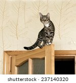 Stock photo cat curious cat on the top of door in blur light background cute funny cat close up young cat on 237140320