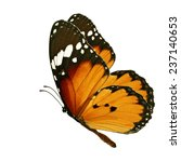 Stock photo beautiful orange butterfly flying isolated on white background 237140653