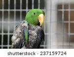 parrot | Shutterstock . vector #237159724