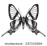 Butterfly Sketch. Detailed...