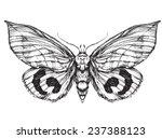 butterfly  sketch. detailed... | Shutterstock .eps vector #237388123