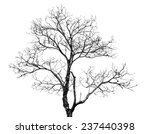 black and white photo of dead... | Shutterstock . vector #237440398