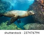 Puppy Sea Lion Seal Coming To...