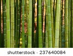 Green Japanese Bamboo In A...