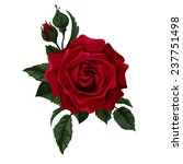 Stock vector red rose isolated on white with leaves perfect for background greeting cards and invitations of 237751498
