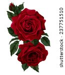 beautiful bouquet of roses... | Shutterstock .eps vector #237751510