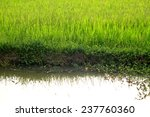 the rice field in thailand | Shutterstock . vector #237760360
