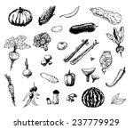 hand drawn vegetables   Shutterstock .eps vector #237779929