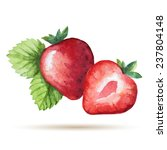 watercolor strawberry isolated... | Shutterstock .eps vector #237804148