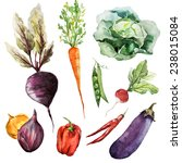 object vegetables watercolor | Shutterstock . vector #238015084