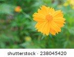 yellow flowers on grass | Shutterstock . vector #238045420