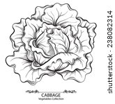 cabbage. vector hand drawn...   Shutterstock .eps vector #238082314