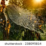 Strings Of A Spider's Web In...