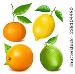 collection of citrus fruits ... | Shutterstock .eps vector #238104490