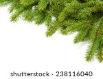 green spruce branches as a... | Shutterstock . vector #238116040