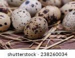 quail eggs | Shutterstock . vector #238260034