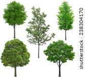 tree | Shutterstock . vector #238304170