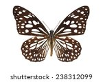 Stock photo leopard butterfly isolated set of realistic colorful tropical butterflies and insect zoology wild 238312099