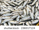 Raw Mackerel Fish On Display...