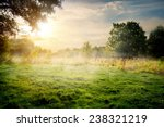 clearing in the forest in sunny ... | Shutterstock . vector #238321219