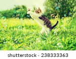 Stock photo cute little kitten playing with soap bubbles on summer grass outdoor 238333363