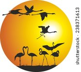 flamingos and sunset in the ring | Shutterstock .eps vector #238371613