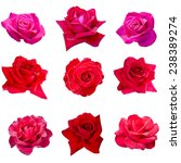Collage Of Nine Pink Roses...