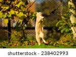 Stock photo funny jumping cat 238402993