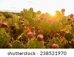 Calm Cactus Desert Sunset In...