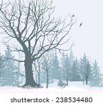 Winter Landscape. Park Or...