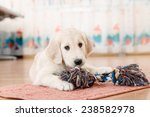 golden retriever puppy playing... | Shutterstock . vector #238582978