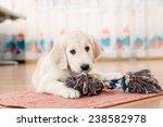 golden retriever puppy playing... | Shutterstock . vector #238582978