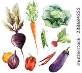 vegetables  food watercolor | Shutterstock .eps vector #238684333
