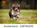 Stock photo dog runs 238706290