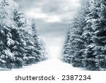 Cold and snowy winter road with blue evergreens and grey clouded skies. Copy space in the center-top and center-bottom. - stock photo