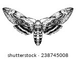 butterfly sketch. detailed... | Shutterstock .eps vector #238745008