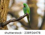 green parrot  ringnecked... | Shutterstock . vector #238926478